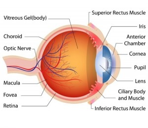image showing the anatomy of an eye